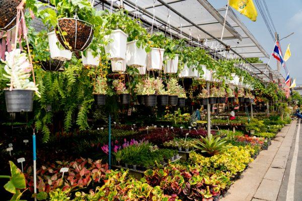 รวม 3 เพจ ร้านขายต้นไม้ ที่น่าซื้อและน่าสะสม ช่วยฟอกอากาศภายในบ้านได้ด้วย